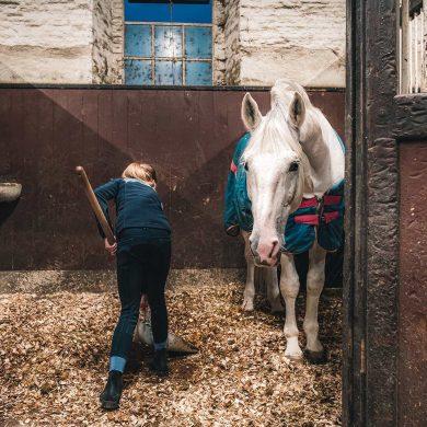 Urlaub mit dem eigenen Pferd in der Normandie