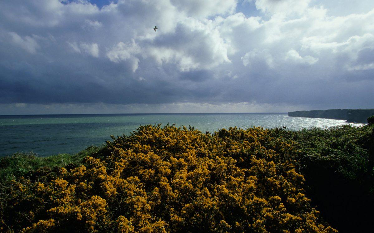 Blick aufs Meer auf der Halbinsel Cotentin