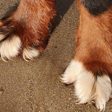 Die schönsten Strände für Hunde in der Normandie
