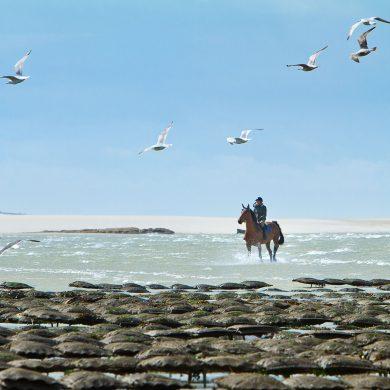 Wanderreiten in der Normandie
