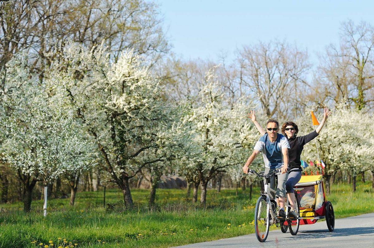 Radfahren vor dem Hintergrund blühender Apfelbäume