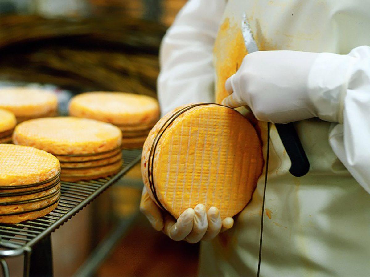Herstellung des Livarot in der Käserei Graindorge