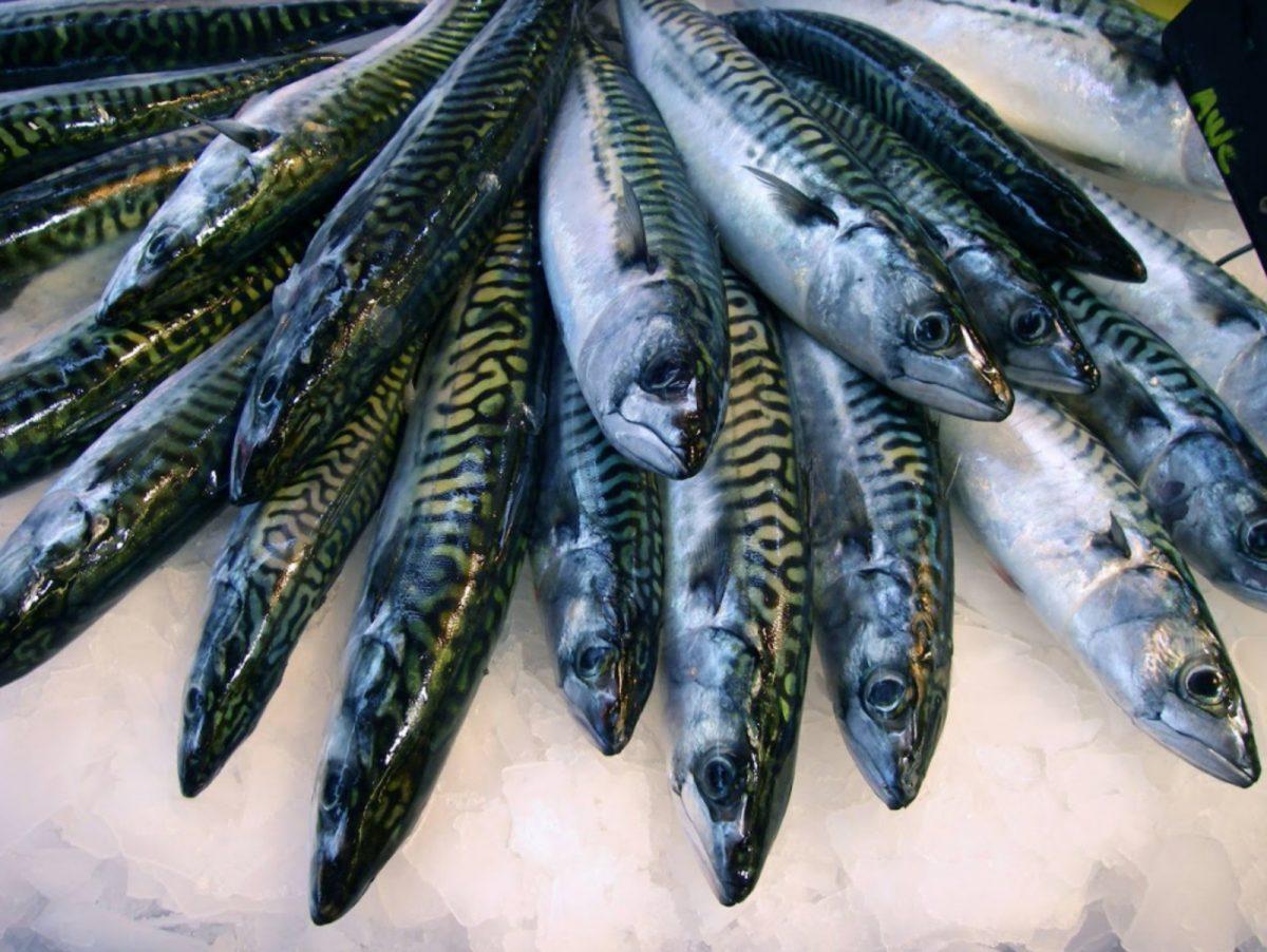 Die Makrele von Trouville