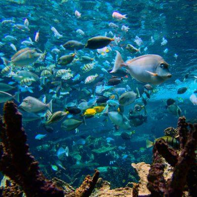 Aquarien und Vivarien