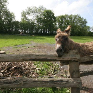 Die schönsten Eselwanderungen in der Normandie