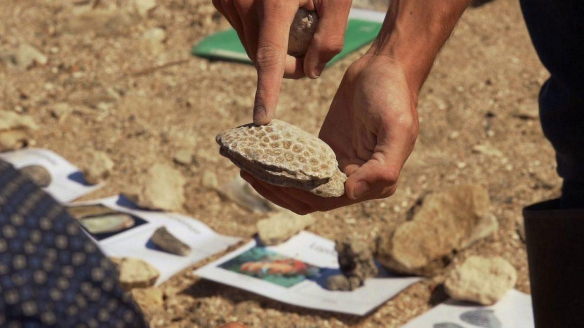 Jonas zeigt Charakteristika der Fossilien in Villers-sur-Mer