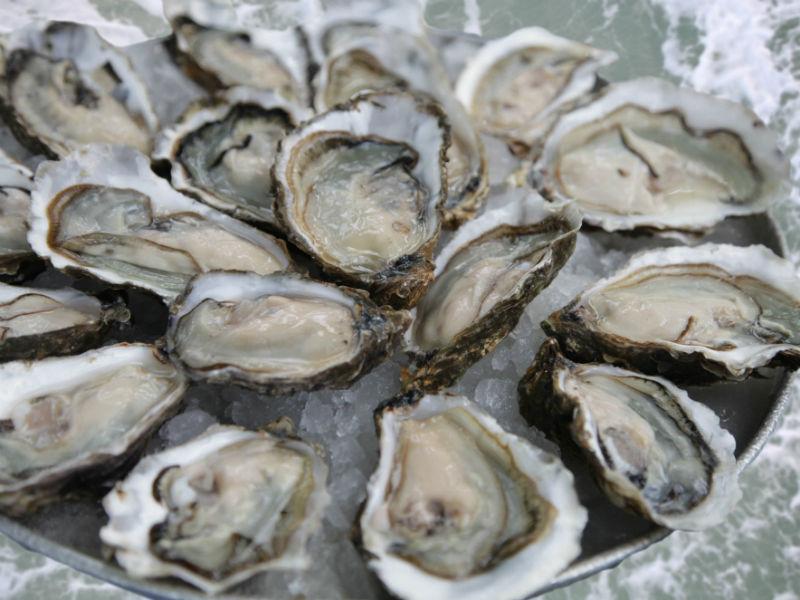 Austern der Normandie